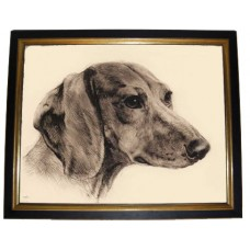 TEMPORARILY OUT OF STOCK  'Bloodhound'