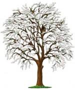 Tree Bluetenbaum Standing Pewter Wilhelm Schweizer