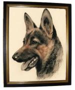 'German Shepherd'