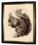 'Squirrel'