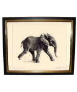 'Young Elephant'