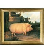 Pig in Sty'