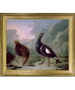 Black Cock w/ Grey Hen'