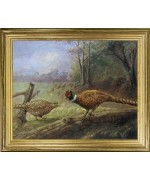 Pheasants Courting'