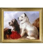 Cairn Terriers'