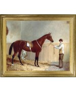 Chesnut Racehorse'