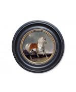 Arab Horse'