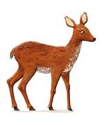 Roe Deer Wilhelm Schweizer